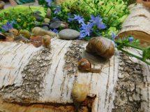 2020.07 Eko domki dla ślimaków